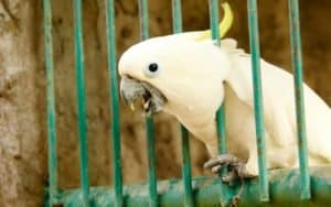 Do Parrots Cry