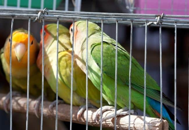 Do Parrots attract Mice 1