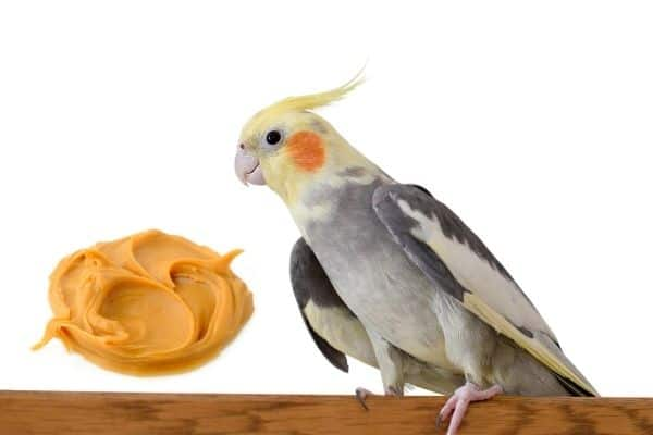 can cockatiels eat peanut butter