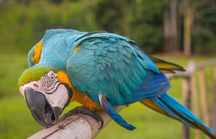 Why Do Parrots Attack Feet